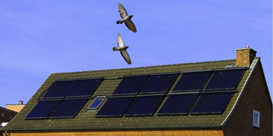 Um seine Solaranlage vor Taubenkot zu schützen, schoss ein Jäger jahrelang mit manipulierten Schrotpatronen in einem Wohngebiet.