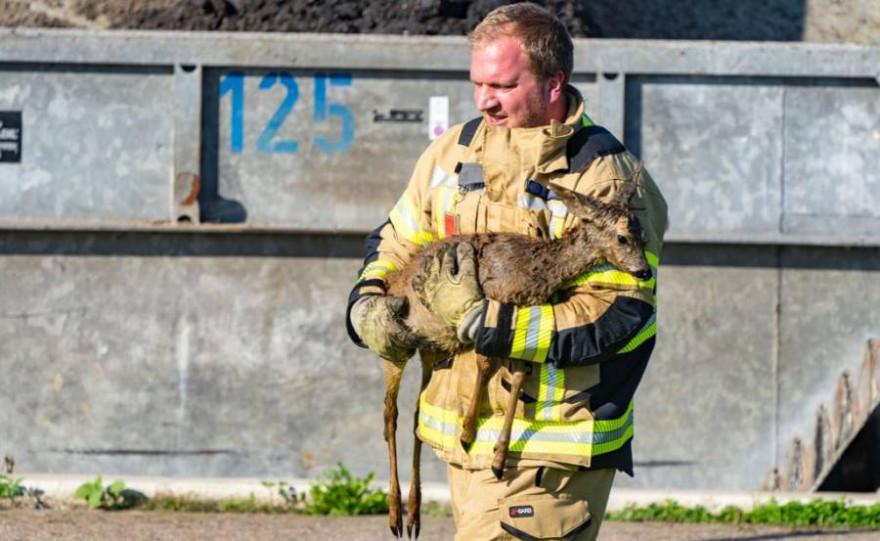 Das gerettete Reh in Xanten-Lüttingen (Foto: Feuerwehr Xanten)