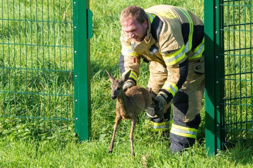 Das unverletzte Tier wurde in die Freiheit entlassen (Foto: Feuerwehr Xanten)