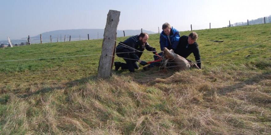 Mit vereinten Kräften schafften es der Jäger und die beiden Polizisten den Damhirsch aus seiner misslichen Lage zu befreien (Foto: Polizei)