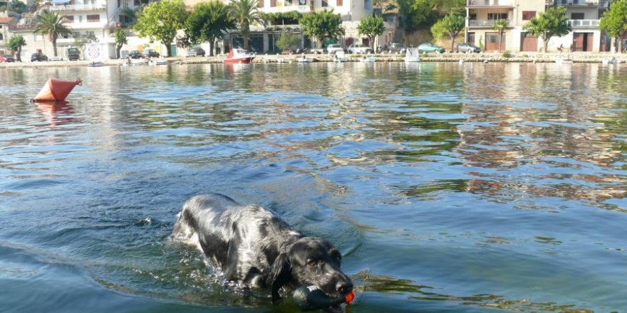 Urlaub mit Hund (Foto: Egbert Urbach, BJV)