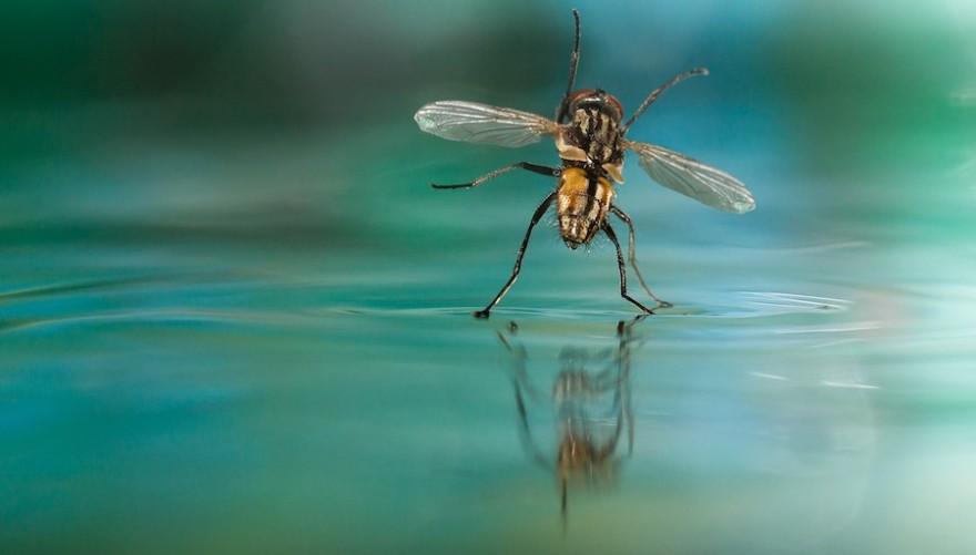 Fliege tanzt auf dem Wasser