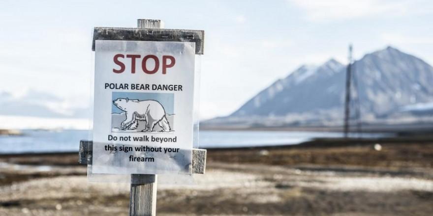 Die Jagd auf Eisbären basiert laut Weltnaturschutzunion IUCN auf Quoten, die jährlich unter Einbeziehung bester wissenschaftlicher und traditioneller ökologischer Maßstäbe gemeinsam mit den Inuit vor Ort festgelegt werden. (Quelle: Pixabay/DJV)