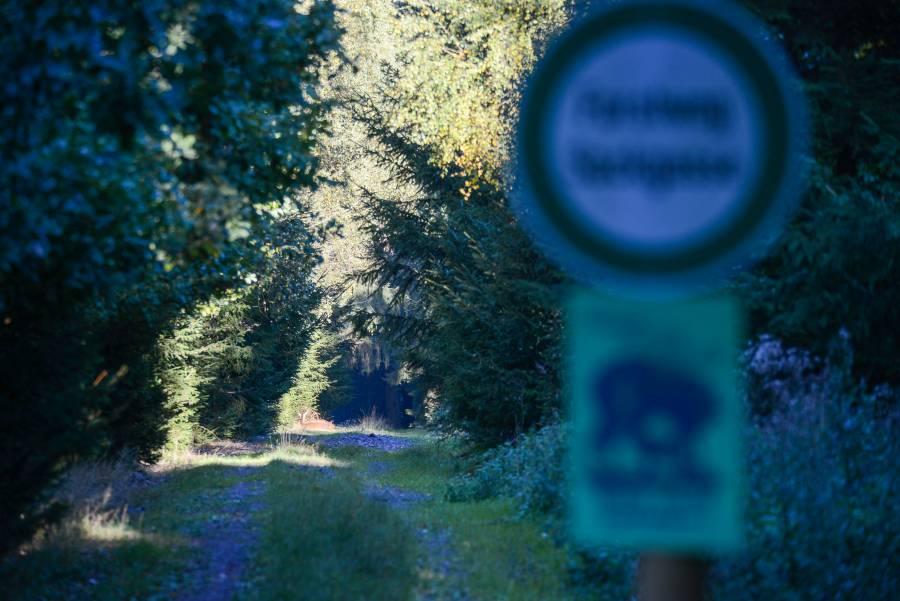 Manchmal jedoch trägt der freundliche Hinweis auf dem Schild durchaus optimale Früchte: liegendes Wild auf dem Weg hinter dem Wildruhezonenschild! (Foto: Burkhard Stöcker)