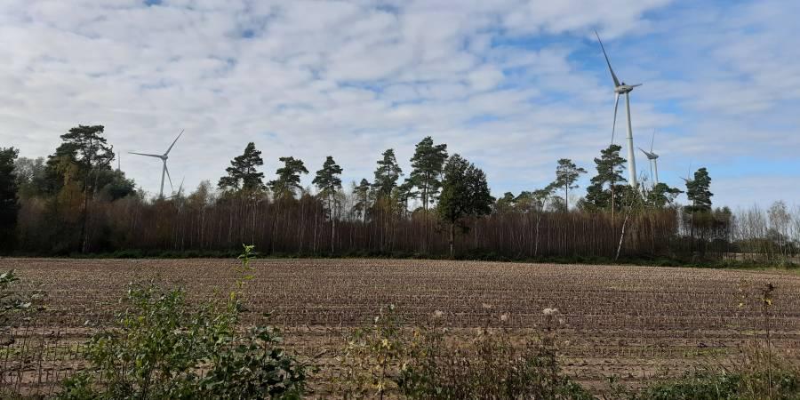 Windräder in einem Waldstück (Beispielbild: mlz)