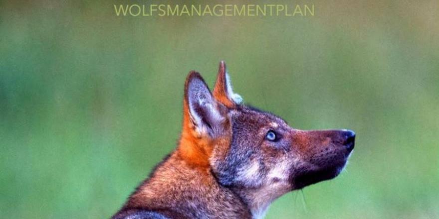 """Quelle: Screenshot """"Managementplan_Wolf_in_Hessen"""""""
