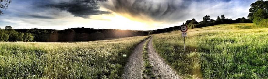 Feld und Wiese