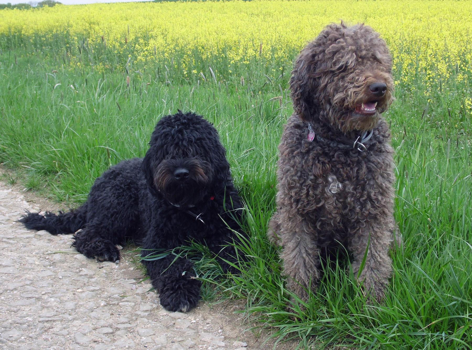 Foto: Verein für französische Vorstehhunde (VBBFL)