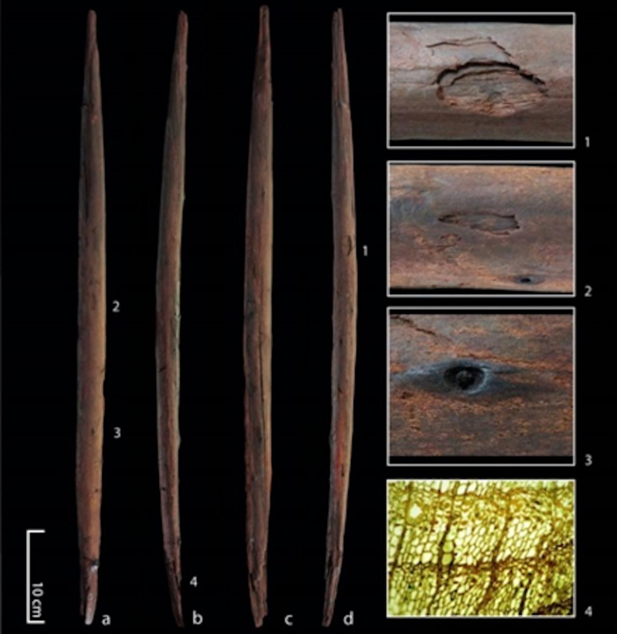 Neuer Wurfstock aus der Fundstelle Schöningen 13 II-4 mit vier Ansichten des Artefaktes und Details:1: Beschädigung durch Einschlag mit stufenförmiger Aussplitterung 2: Einschlagbeschädigung in Form zweier unregelmäßiger Vertiefungen 3: Beispiel für einen abgeschnittenen und abgeriebenen Astansatz, der mit einem Werkzeug geglättet wurde 4: Dünnschnitt der die exzellente Erhaltung der Zellstruktur des Fichtenholzes zeigt. Die Probe stammt vom beschädigten Ende des Werkzeuges (Abbildung: Alexander Janas)