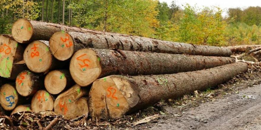 Käferholz am Wegesrand (Quelle: Wald und Holz NRW - Stefan Befeld)