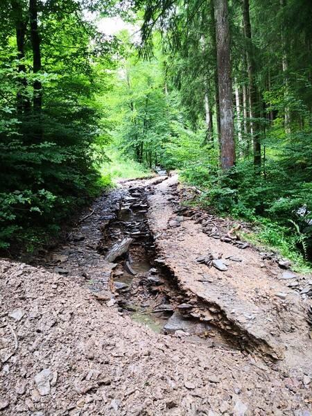 Weggespülter Waldweg im Sauerland (Bild: Wald und Holz NRW).