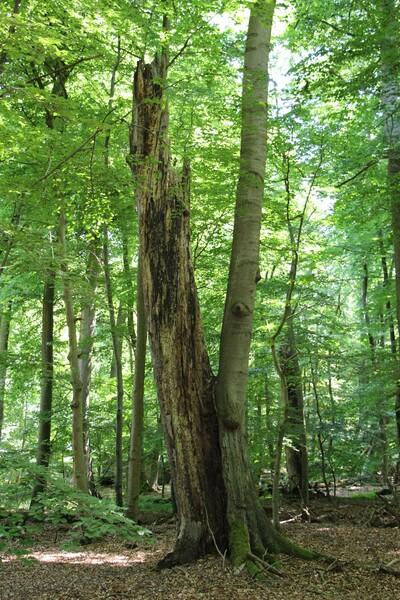 Leben und Vergehen liegen wie hier auch im Wald oft sehr nah beieinander. (Bild: Dr. Burkhard Herzig, Wald und Holz NRW)