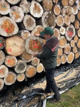 Dr. Bertram Leder, Leiter des Zentrums Wald und Holzwirtschaft, ist sehr zufrieden mit der Holzqualität (Foto: Wald und Holz NRW, Katja Niewienda)