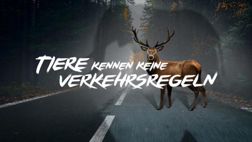 """Der DJV startet gemeinsam mit dem ACV die Kampagne """"Tiere kennen keine Verkehrsregeln"""" (Quelle: tanguilan/stock.adobe.com und veneratio/stock.adobe.com)"""