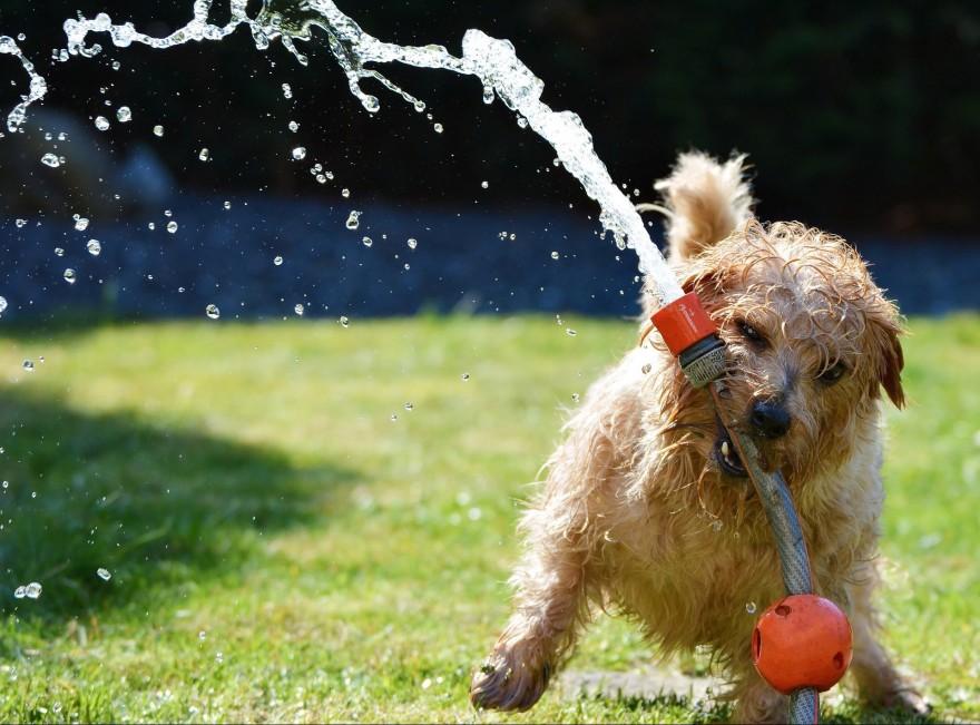 Hund mit Gartenschlauch