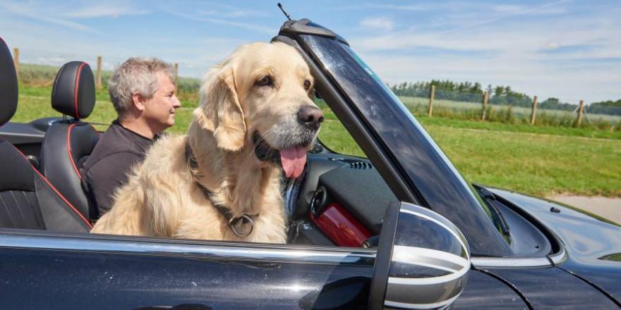 Brandgefährlich bei Ausweich- oder Bremsmanövern: Hund auf Beifahrersitz. (Foto: ADAC / Uwe Rattay)