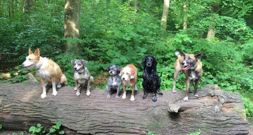 Hunde im Hundewald Lübeck
