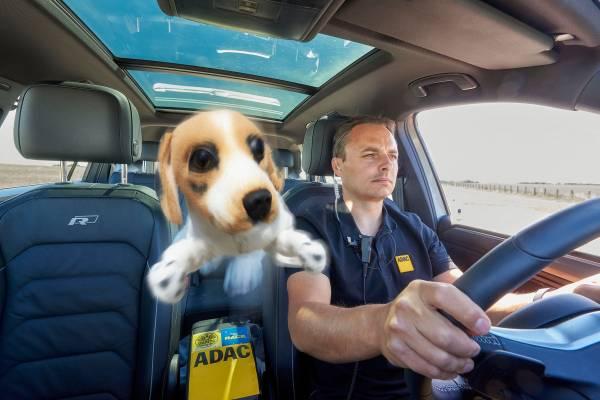 Ein ungesicherter Hund fliegt bei einem Bremsmanöver oder einem Auffahrunfall wie ein Geschoss nach vorne. Lebensgefahr für Tier und Mensch! (Foto: ADAC / Uwe Rattay)