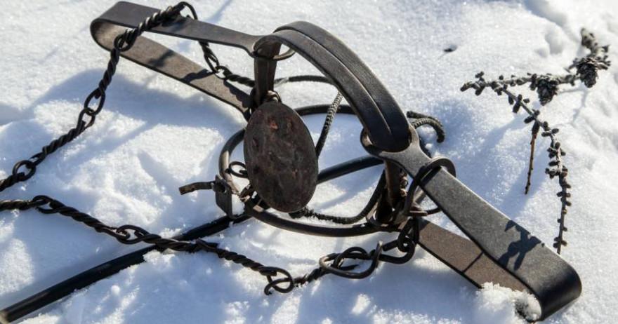 Tellreisen im Schnee (Beispielbild: Evgenii Mitroshin)