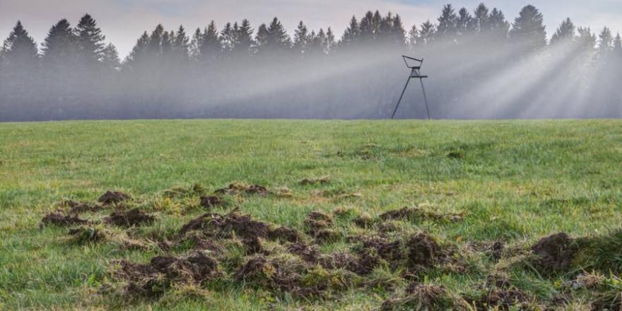 Eine von Wildschweinen umgebrochene Grünfläche vor einer Ansitzleiter (Symbolbild: iStock/Edgar G. Biehle)
