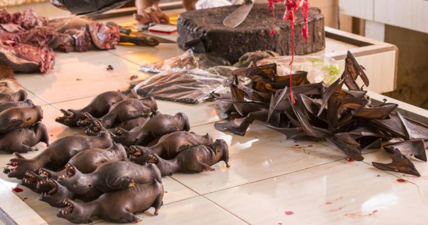 Fledermäuse auf einem Markt in Indonesien (Symbolbild: iStock/mauriziobiso)