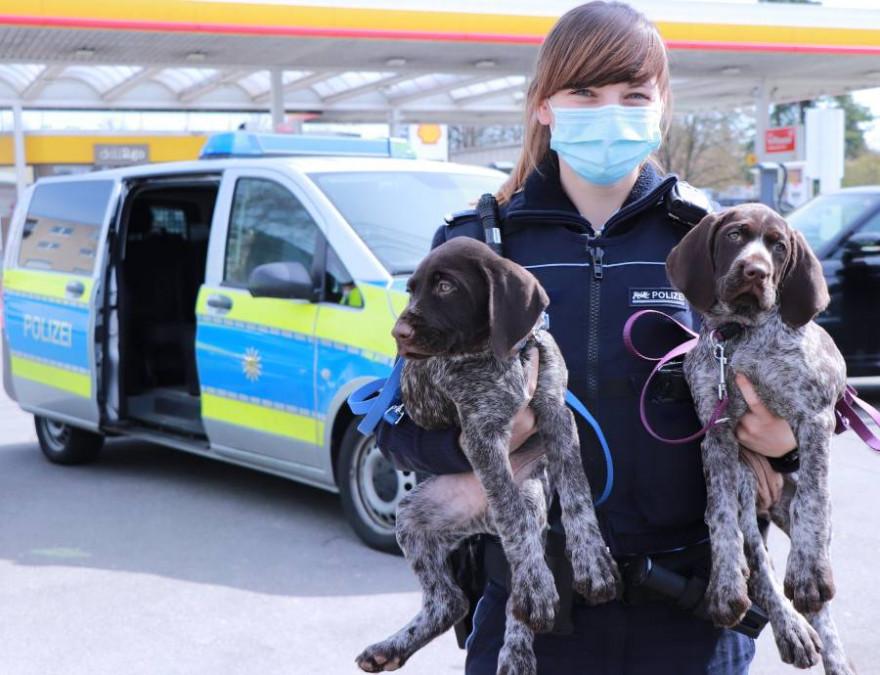 Eine Polizistin mit den beiden illegal eingeführten Welpen (Foto: Polizeipräsidium Ravensburg)