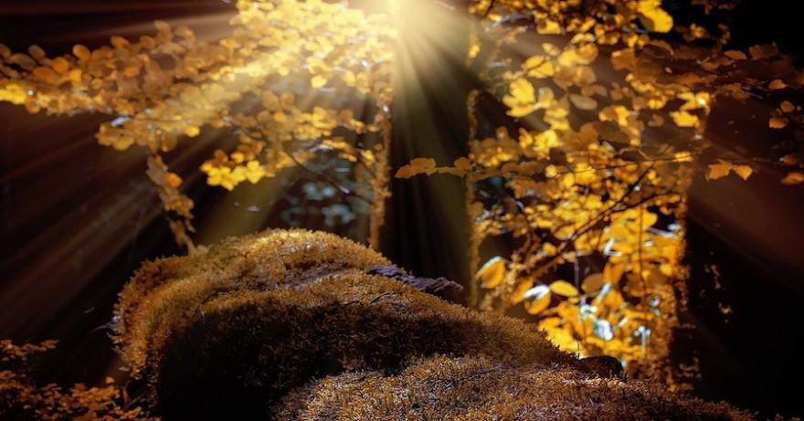 Baum im Sonnenschein