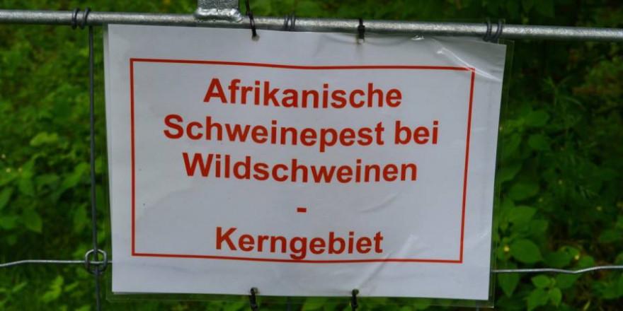 Flächenbrand: Die Afrikanische Schweinepest tritt nun in sechs brandenburgischen Landkreisen auf. Der LJVB fordert mehr Unterstützung bei der Seuchenbekämpfung. (Quelle: Hamann/LJVB)