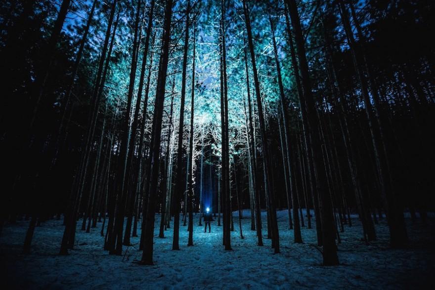 Lampe im Wald
