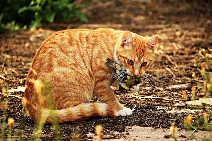 Katze frisst Vogel