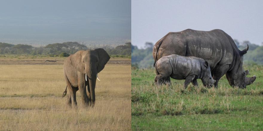 Elefant und Nashörner