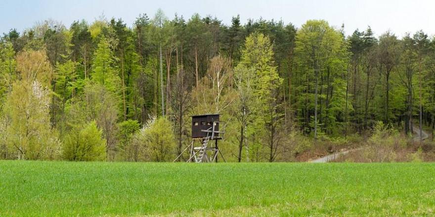 Hochsitz/Kanzel an einer Wiese (Foto: Gerald Thurner)