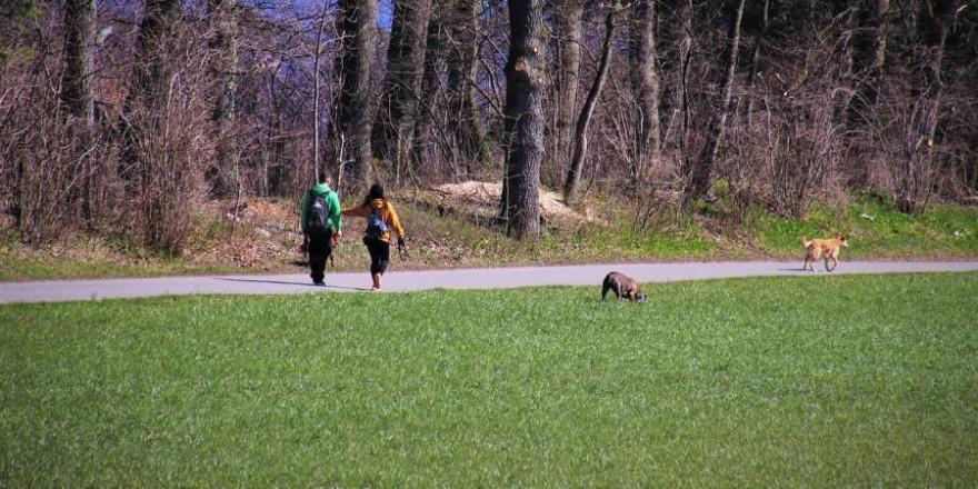 So oder ähnlich sieht es tagtäglich überall in Deutschlands Wäldern und Feldern aus: Kofferraum auf und Hunde von der Leine. (Beispielbild: pasja1000)