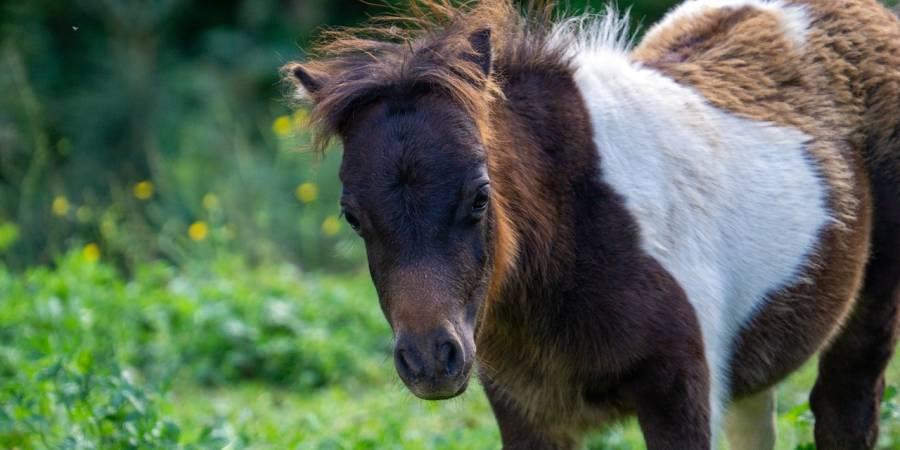 Ein Pony (Symbolbild: Jürgen Bierlein)