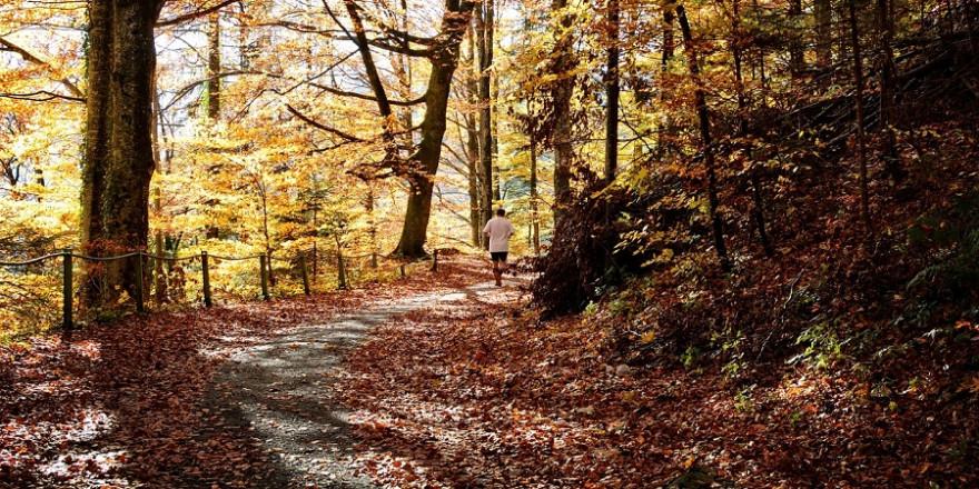 Jogger im Herbstwald.