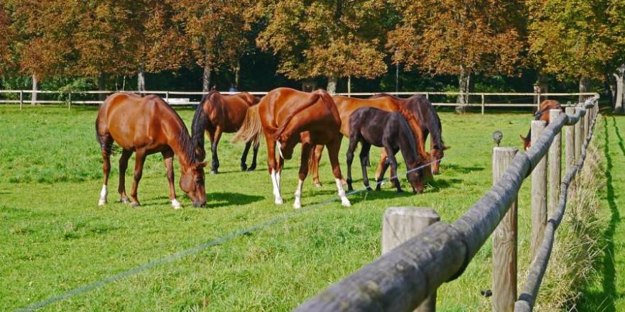 Mehrere Pferde auf einer Koppel (Foto: Erich Westendarp)