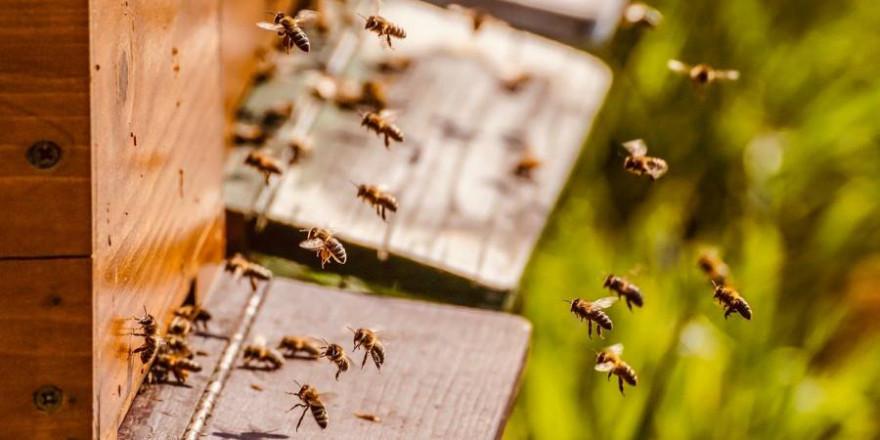 Bienen vor einem Bienenstock (Symbolbild: Susanne Jutzeler)