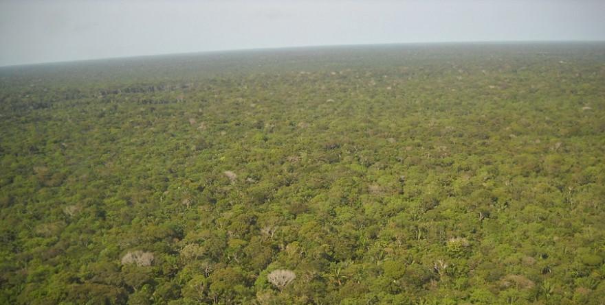 Wald in Brasilien