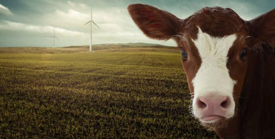 Die neuen Sektorziele für die CO2-Senkung in der Landwirtschaft sind ambitioniert. (Symbolbild: nosita)