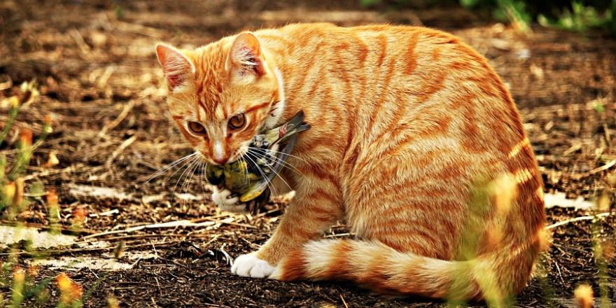 Katze mit Singvogelbeute