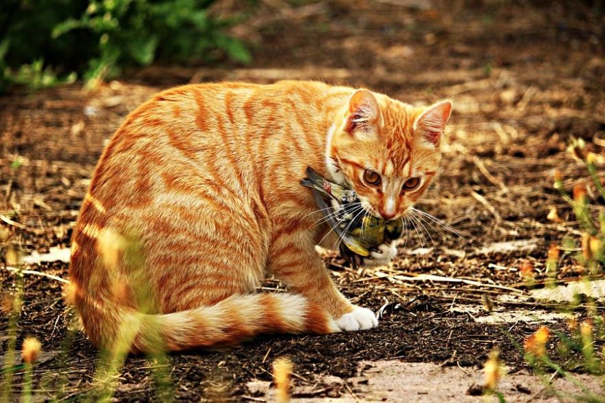 Katze mit Singvogel