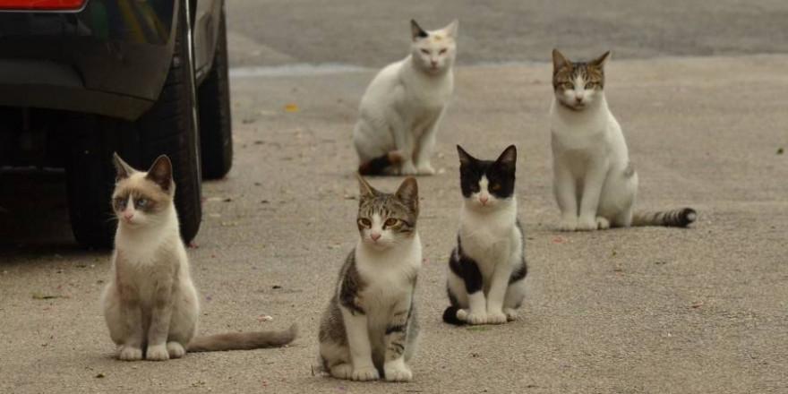 Fünf Katzen neben einem Auto auf der Straße sitzend (Symbolbild: Eveline de Bruin)