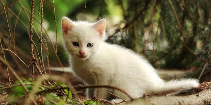 Eine junge Katze (Beispielbild: Susann Mielke)