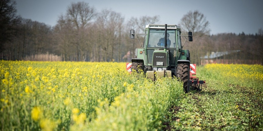Um die Bejagung von Schwarzwild bei Drückjagden zu erleichtern, dürfen in Baden-Württemberg jetzt auch Zwischenfruchtflächen gemulcht werden.