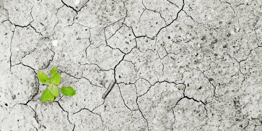 Grüne Pflanze auf vertrocknetem, rissigem Boden (Symbolbild: andreas160578)