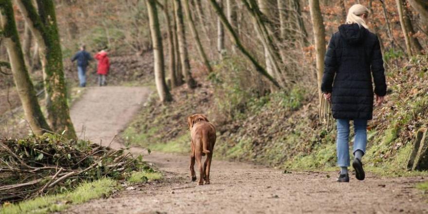 Werden Hunde im Wald ohne Leine geführt besteht die Gefahr, dass sie jederzeit verleitet werden können, einer Spur oder einem abspringenden Stück Wild zu folgen (Foto: Sina W.)