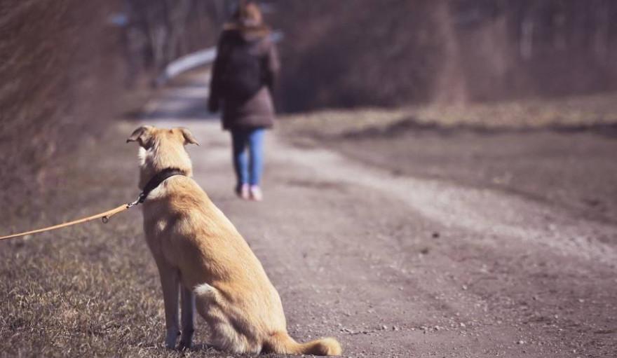 Ein angeleinter Hund blickt seinem Frauchen hinterher (Symbolbild: Alexas_Fotos)