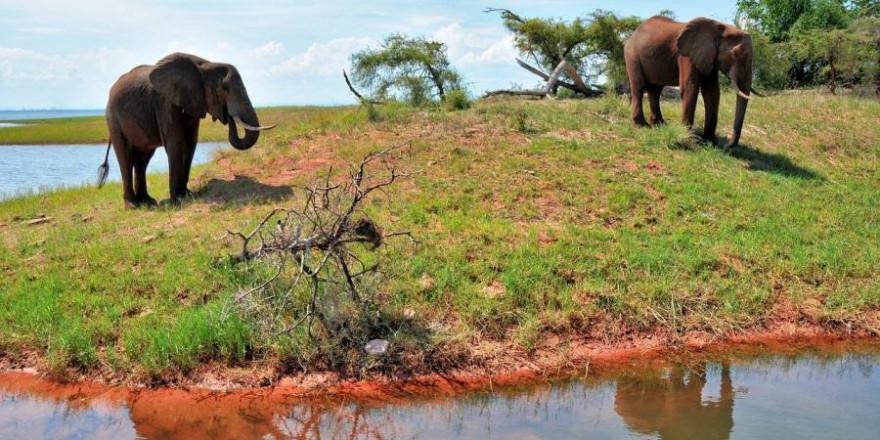 Zwei Elefanten in Simbabwe (Symbolbild: Albrecht Fietz)