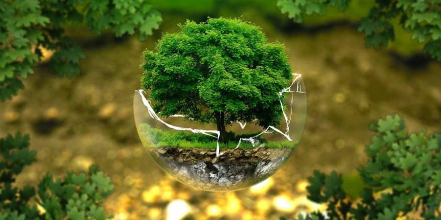 Der Zustand der Umwelt in Nordrhein-Westfalen hat sich in vielen Bereichen verbessert, in anderen Bereichen ist er weiterhin besorgniserregend. (Symbolbild: ejaugsburg)