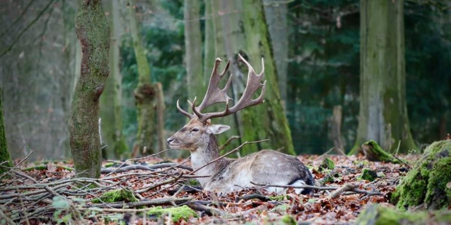 """""""Unser Wild gehört in unsere Wälder"""" (Foto: Annette Meyer)"""